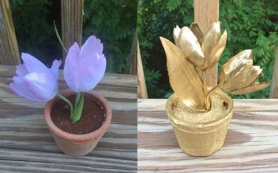 flowerphotojioner